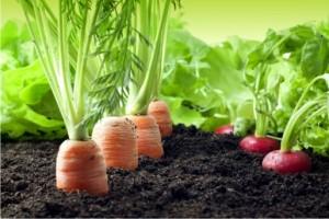modele flyere agricultura, ferme, legume, fructe
